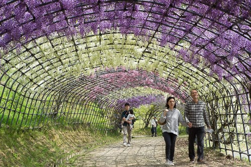 Fuji Tunnel Crowds